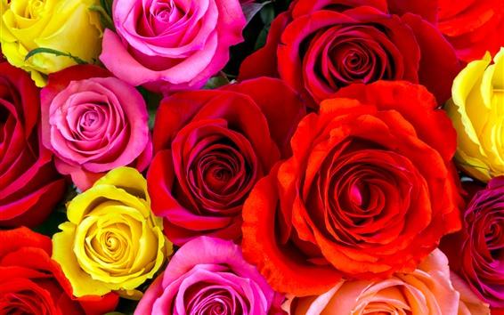 桌布 紅色,黃色,粉紅玫瑰,花瓣