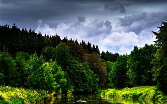 壁紙 川、森、木、雲