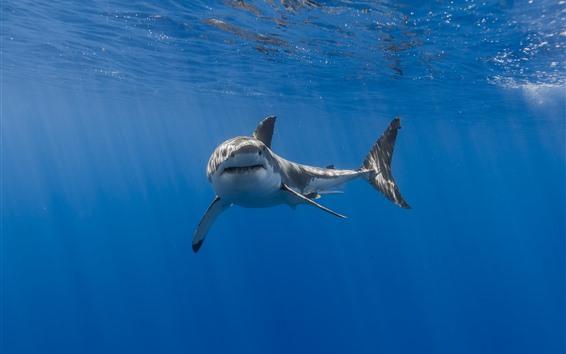 Wallpaper Shark, mouth, teeth, underwater, sea