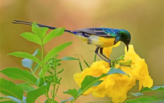 Обои Солнечная птица, птица, желтые цветы, зеленые листья