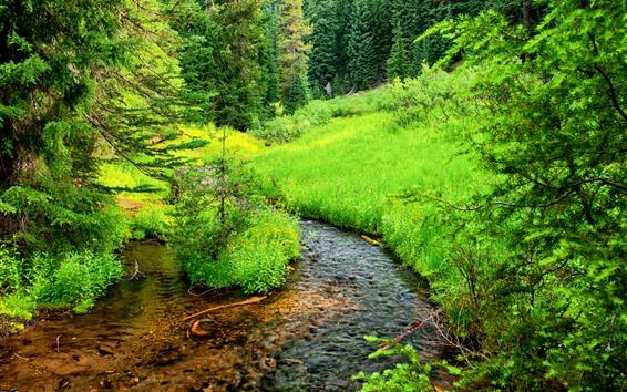 Обои Деревья, трава, зеленый, поток, природа пейзаж