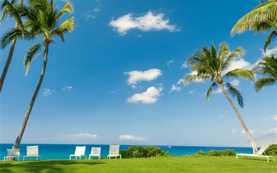 Обои Тропическое, море, пальмы, стулья, луг