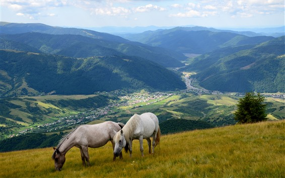 Wallpaper Two horses, slope, mountains, valley, village