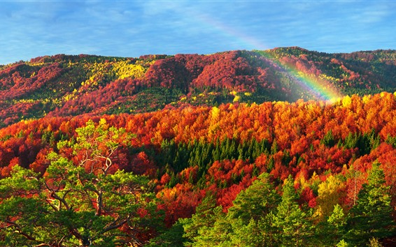 Fond d'écran Ukraine, Carpates, Bel automne, rouge, jaune, vert