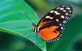 緑の葉の上に赤と黒蝶