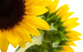 Preview wallpaper Beautiful Sunflower