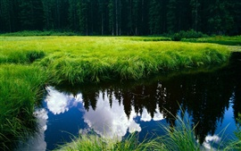 Preview wallpaper Clear water surrounded by green grass