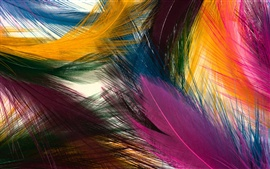 Preview wallpaper Colorful feathers