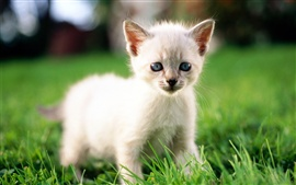 Preview wallpaper Cute little white cat