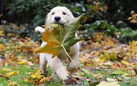 Preview wallpaper Dog and leaves