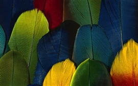 Preview wallpaper Feather color close-up