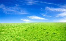 Green grass blue sky
