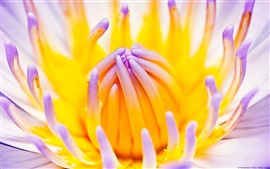 Preview wallpaper Lotus Macro