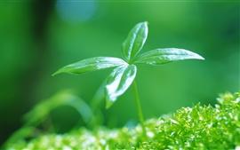 Новые прорастания зелеными листьями