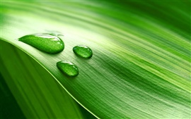 Piece of fresh green leaves with water drops