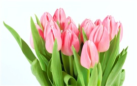Pink tulipes