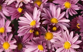 Preview wallpaper Purple flowers