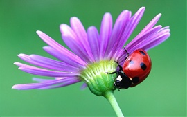 Preview wallpaper Red Beetle and flower