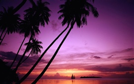 Preview wallpaper Sunset palm tree silhouette
