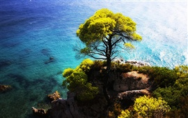 The blue sea side stands a tree on the cliff