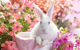 Preview wallpaper White rabbit and flowers