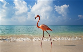 Preview wallpaper A flamingo beach