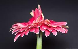 Una flor roja