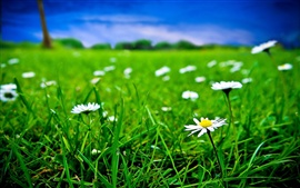 Preview wallpaper Green grass and white flowers