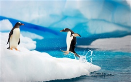 Happy Antarctic penguins on ice