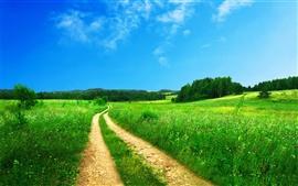 Caminho na grama