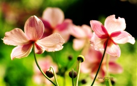 Preview wallpaper Pink wildflowers