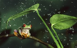 Preview wallpaper Rainy night frog