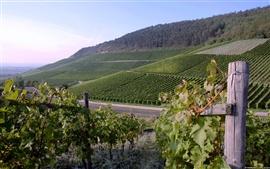 Vineyard na Alemanha