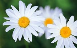 壁紙のプレビュー 白い花