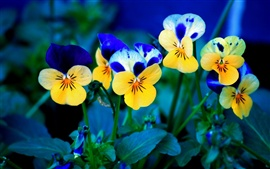 Preview wallpaper Yellow and blue flowers