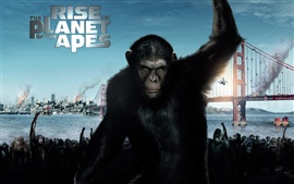 Preview wallpaper 2011 Rise of the Planet of the Apes