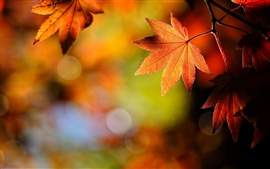 Preview wallpaper Autumn leaves nature