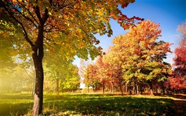 Preview wallpaper Autumn trees and leaves