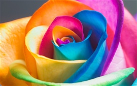 Preview wallpaper Colorful rose petals