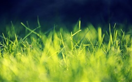 Preview wallpaper Green grass macro