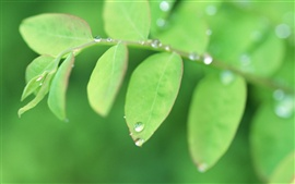 Preview wallpaper Green leaves