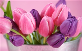 Pink and purple tulips flowers