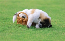 Puppy basket grass