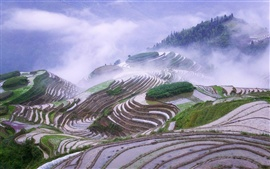 Rice terraces in early morning mist