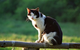The cat in the sun