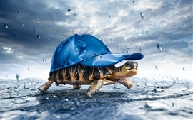 Turtle carrying a hat in rain