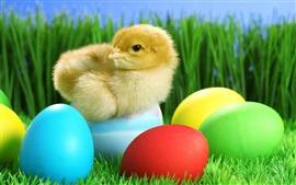 Preview wallpaper Cute chick and Easter eggs