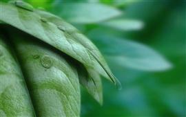 Зеленые листья с макро капли воды