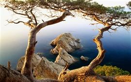 미리보기 배경 화면 나무와 바위의 해안