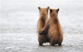 Dois bonito urso
